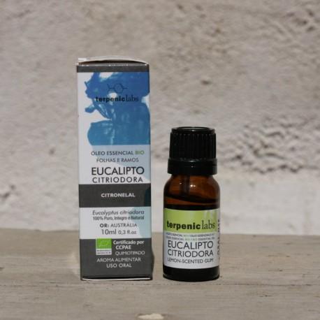 Eucaliptus citriodora